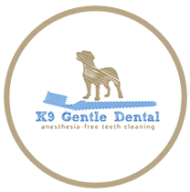 Burnaby - EA Sports (Private) - K9 Gentle Dental Teeth Cleaning