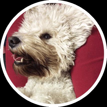 Dog Dental Care | Teeth Cleaning for Dogs | K9 Gentle Dental
